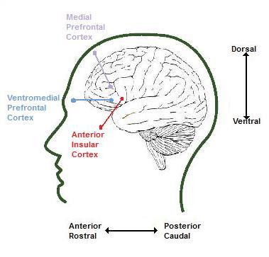 Map of the Emotional Brain (3/6)