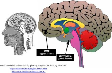ventromedial-prefrontal-cortex (1)