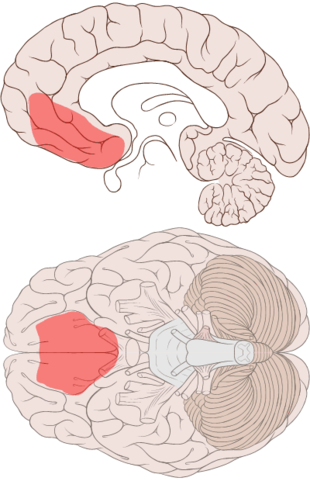 Map of the Emotional Brain (2/6)