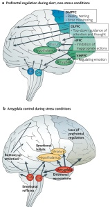 When the Anxious Amygdala Does the Thinking!?