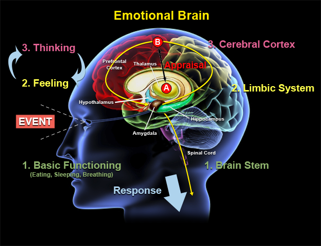 mental/emotional effects of steroids